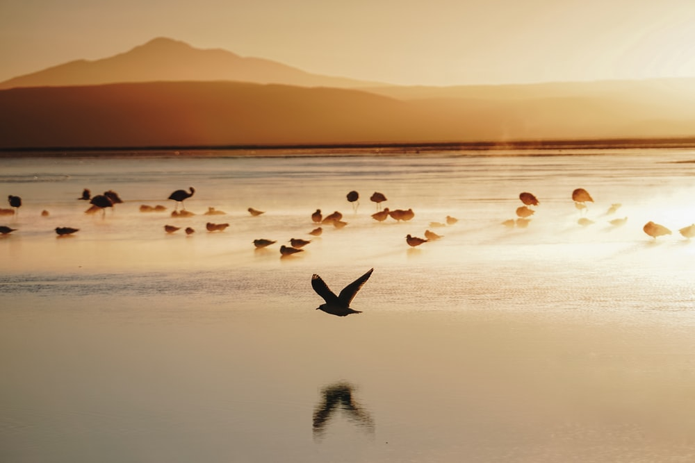 flock of birds in seashore