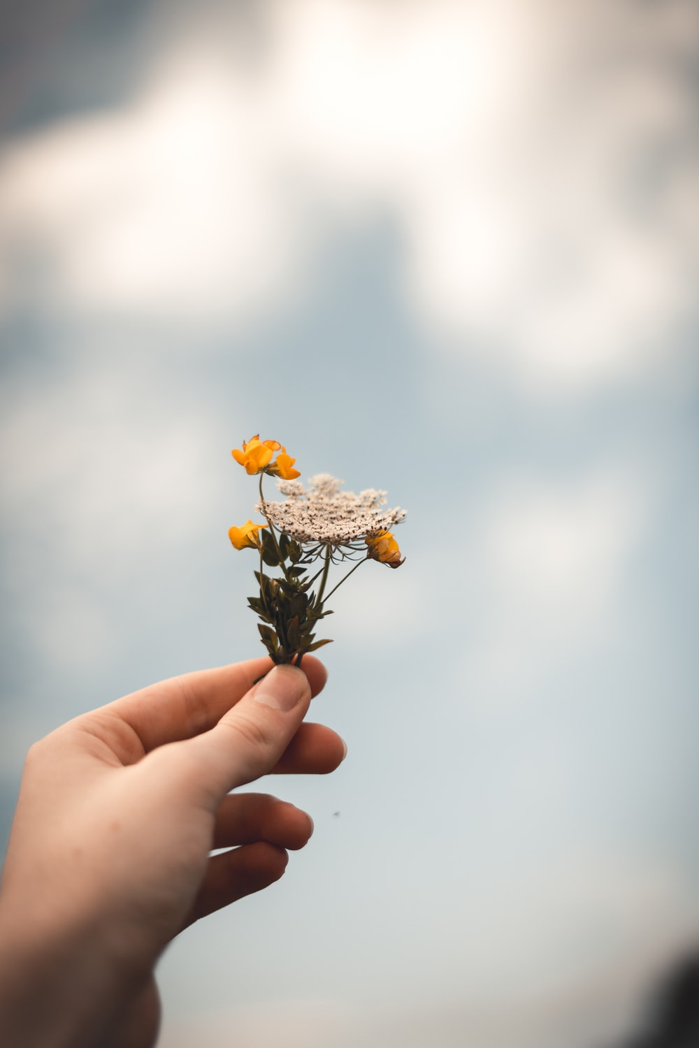 person holding flowers