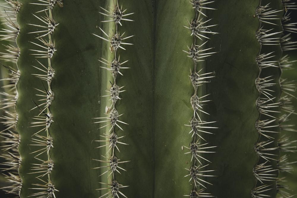 macro photograph of cactus plant