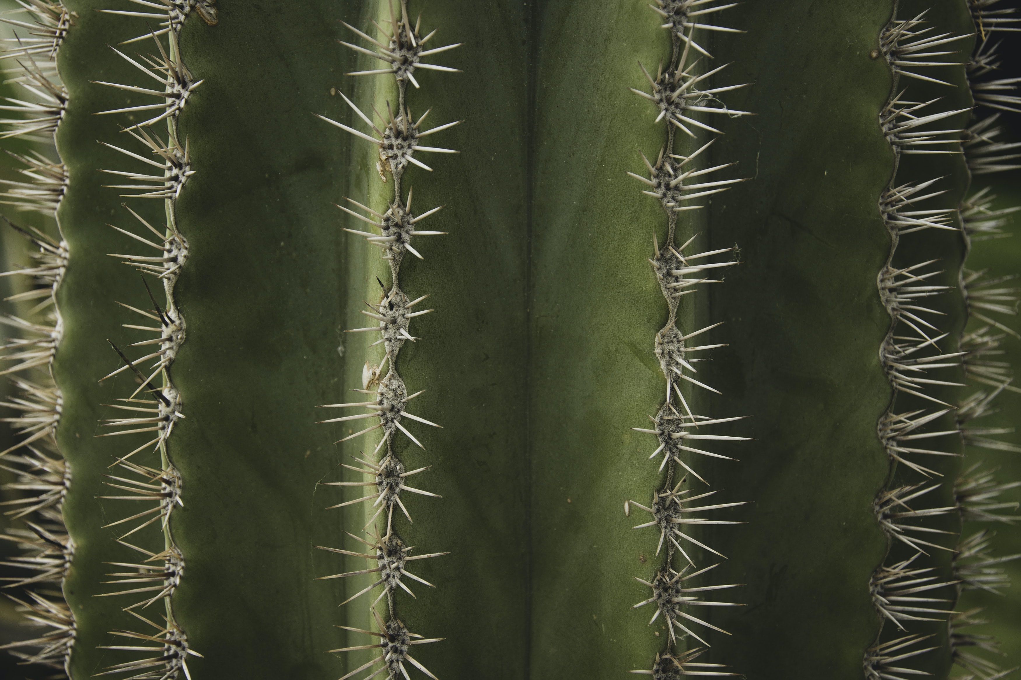 macro photograph of cactus plant