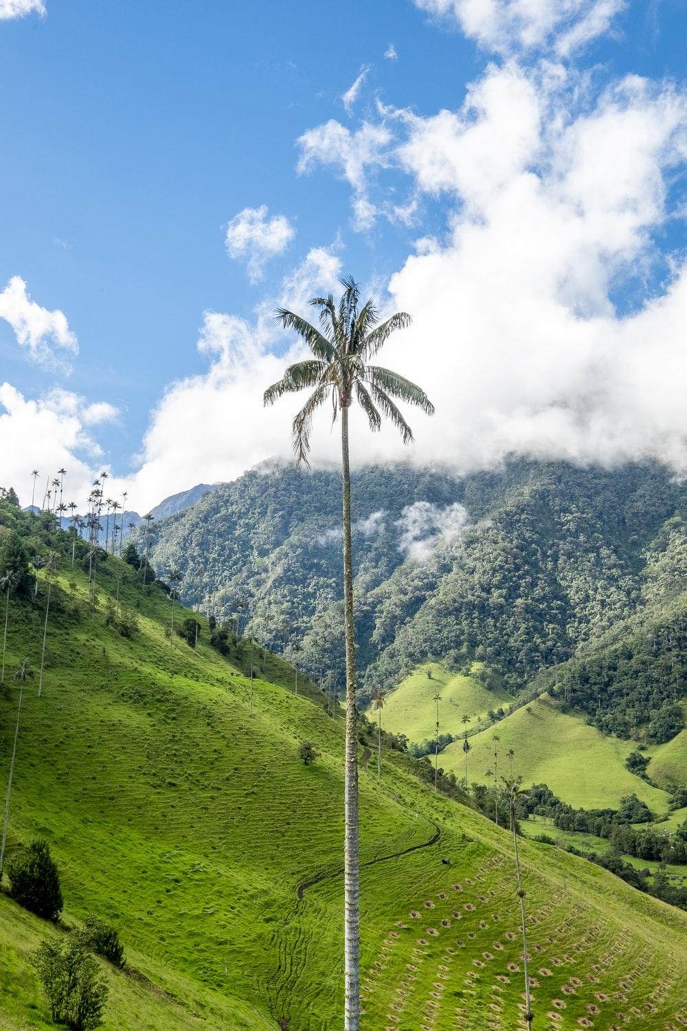 green palm tree between grass field under cloudy sky at daytime