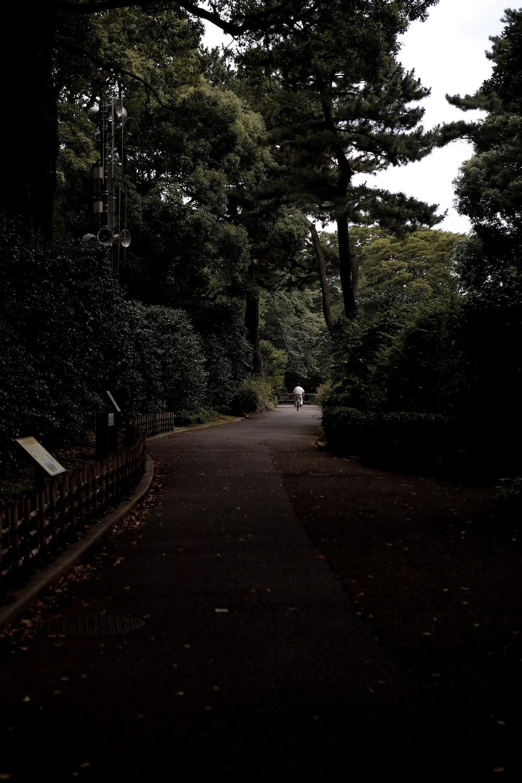 concrete pathway between trees