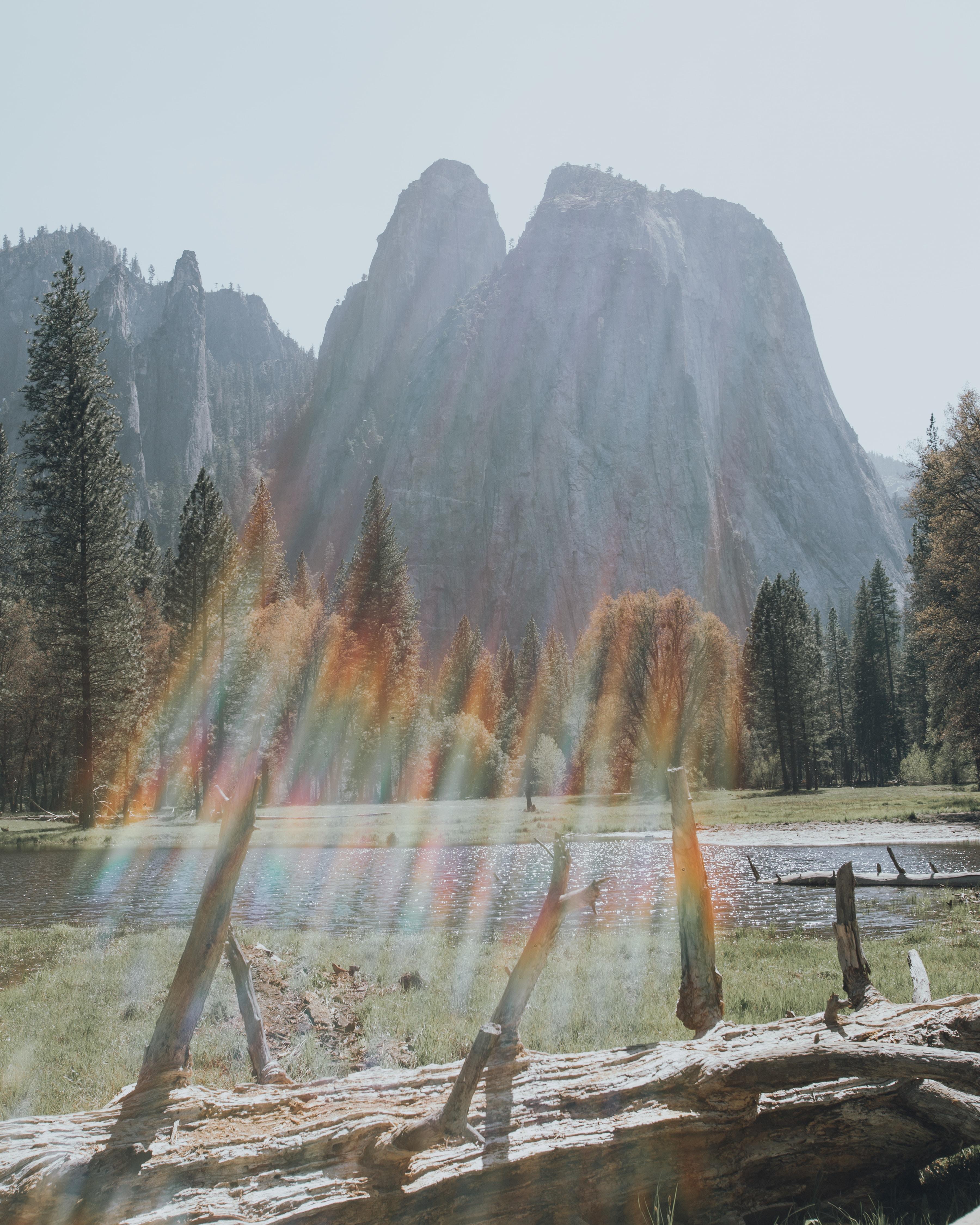 trees beside mountain