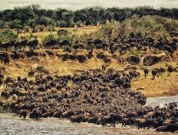 Pirschfahrt in der Massai Mara