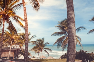 waves crashing through shores surrounded by coconut tress and cottage