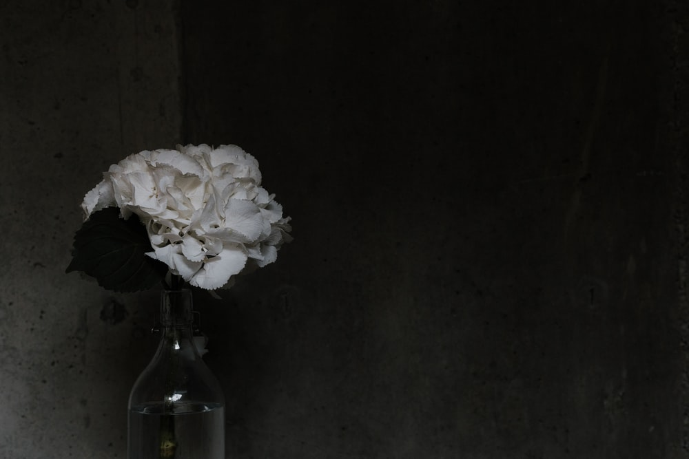 white petaled flowers on clear glass vase