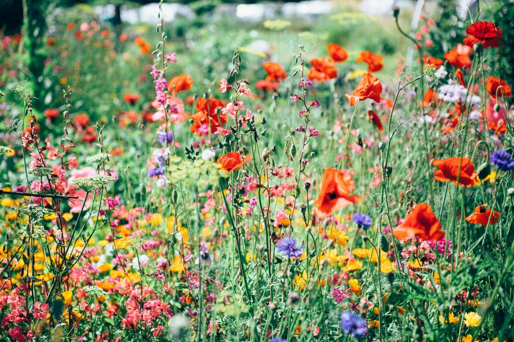 red, pink, and yellow flowering plants