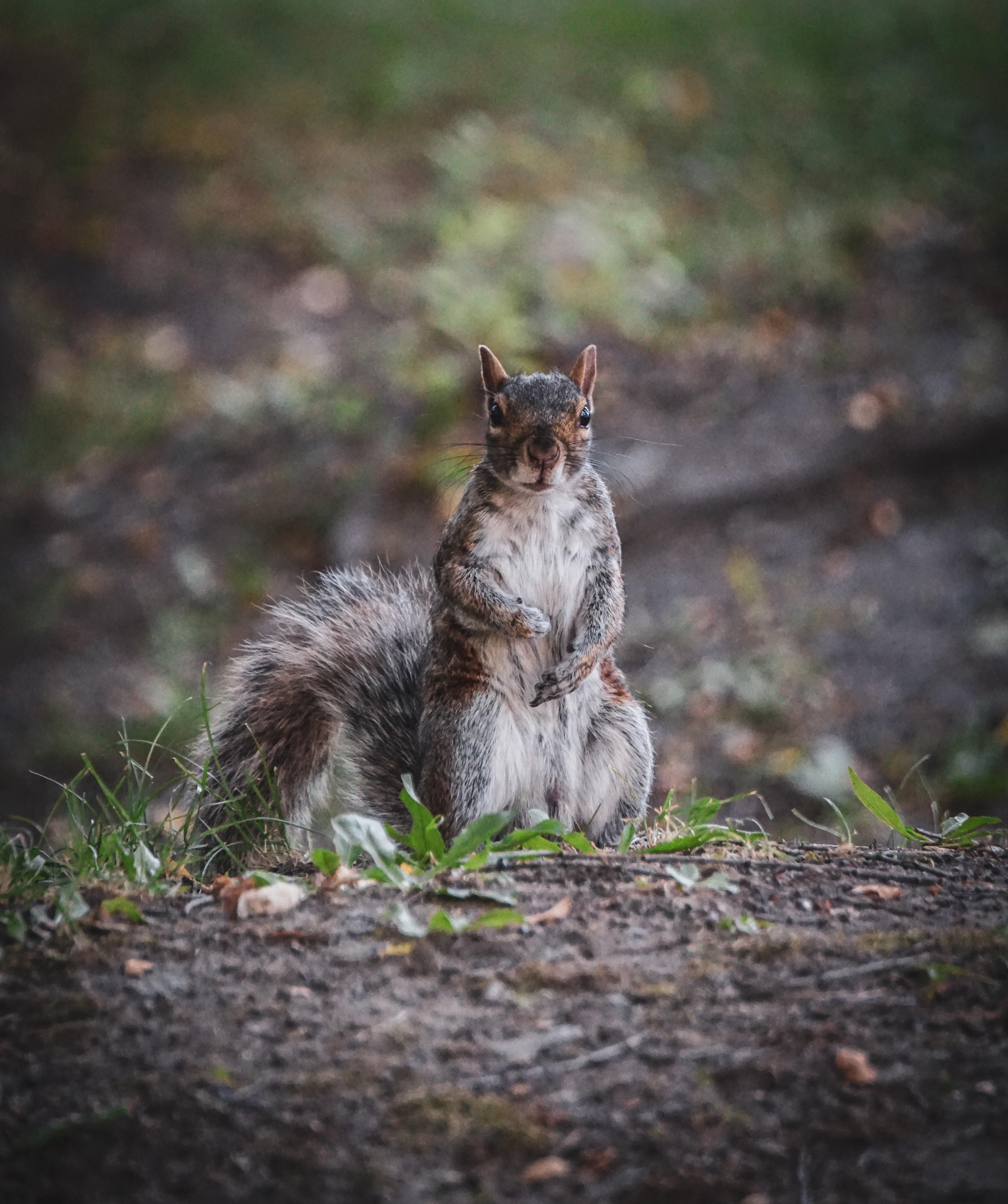 squirrel+removal+cincinnati