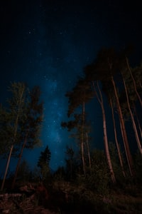 green trees under galaxy with stars