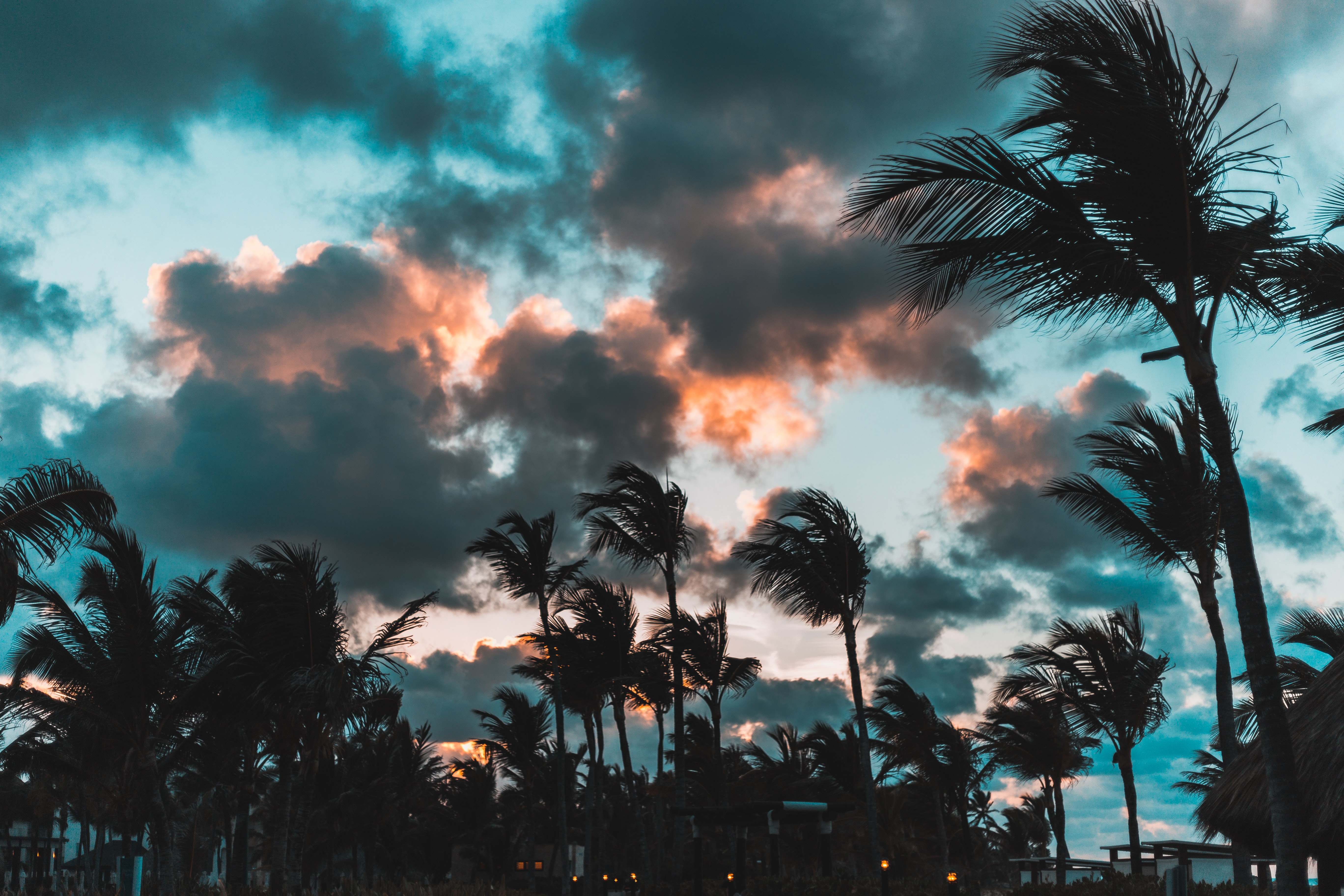 silhouette of palm trees during golden hour