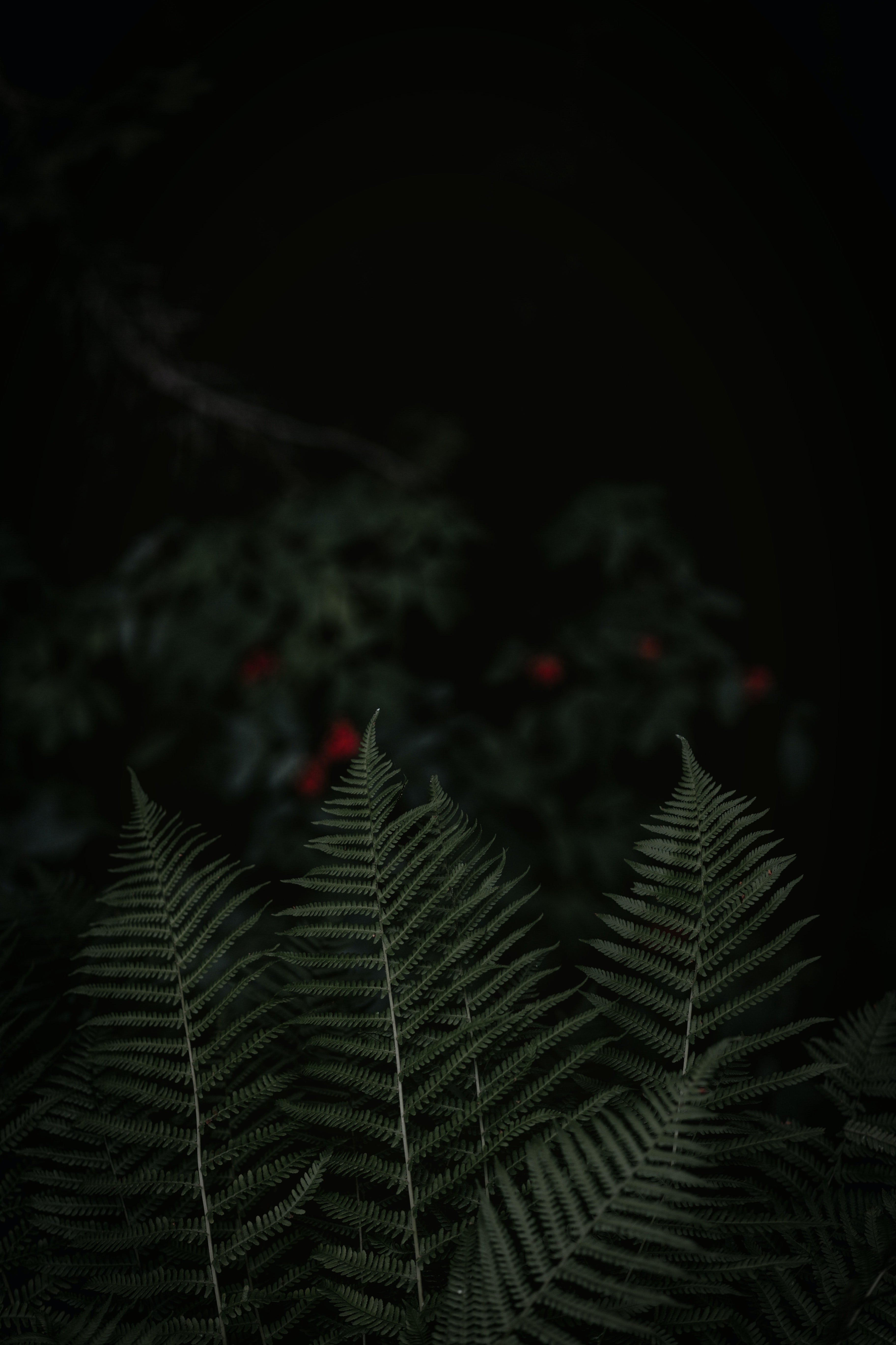 focused photo of green leaves during nighttime