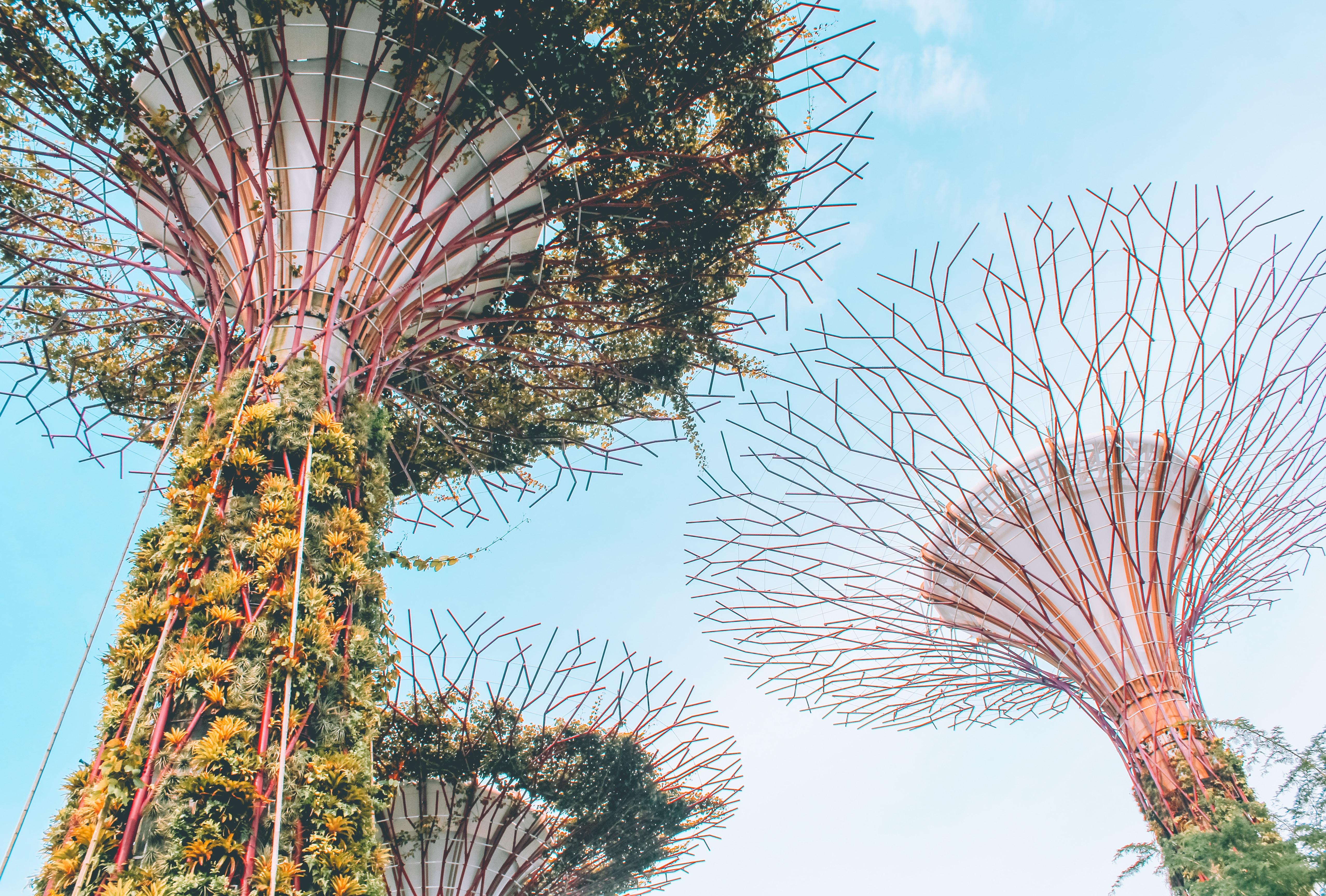 yellow flowering tree during daytime