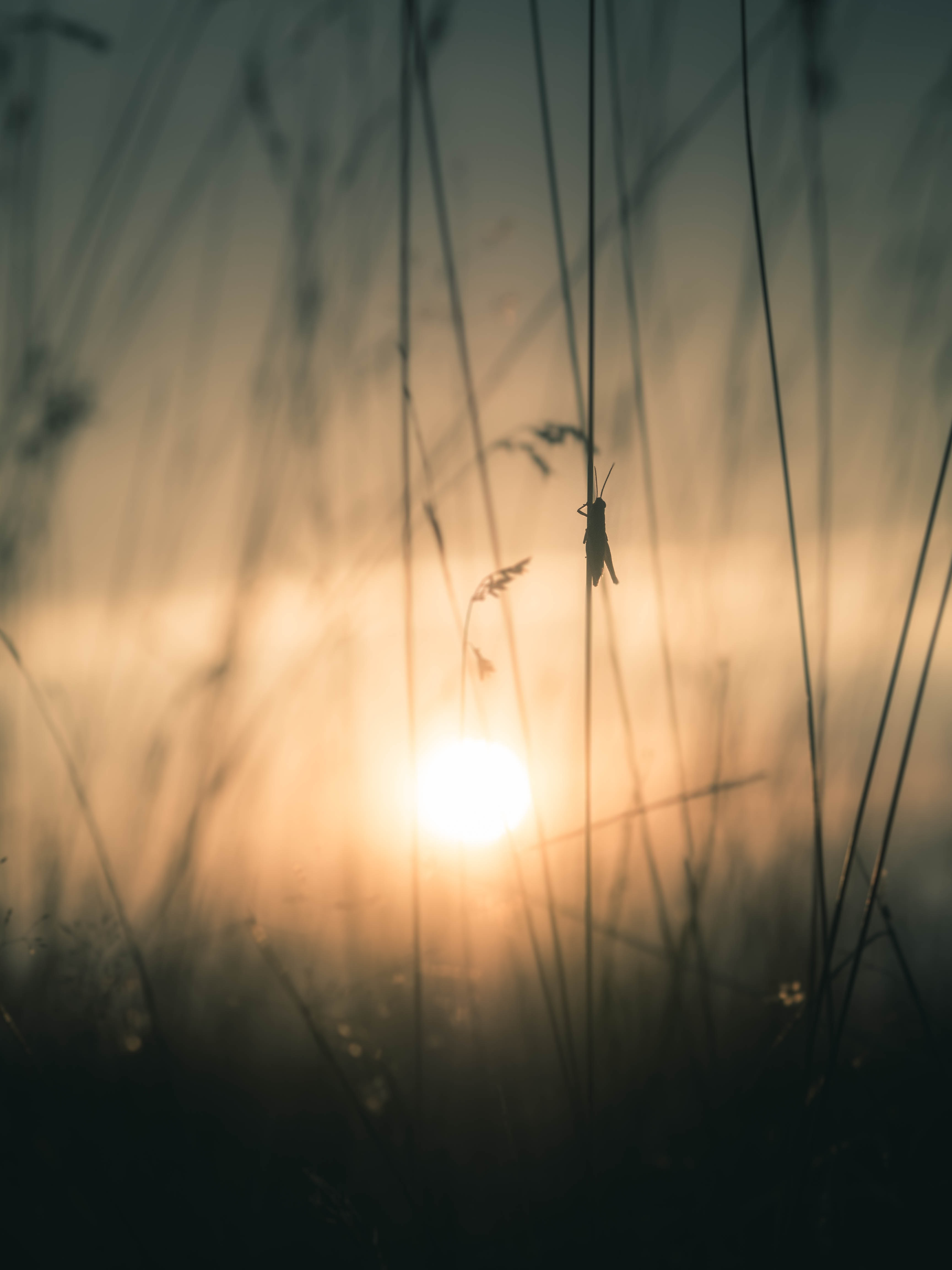 silhouette of grasshopper on grass photography during golden hour