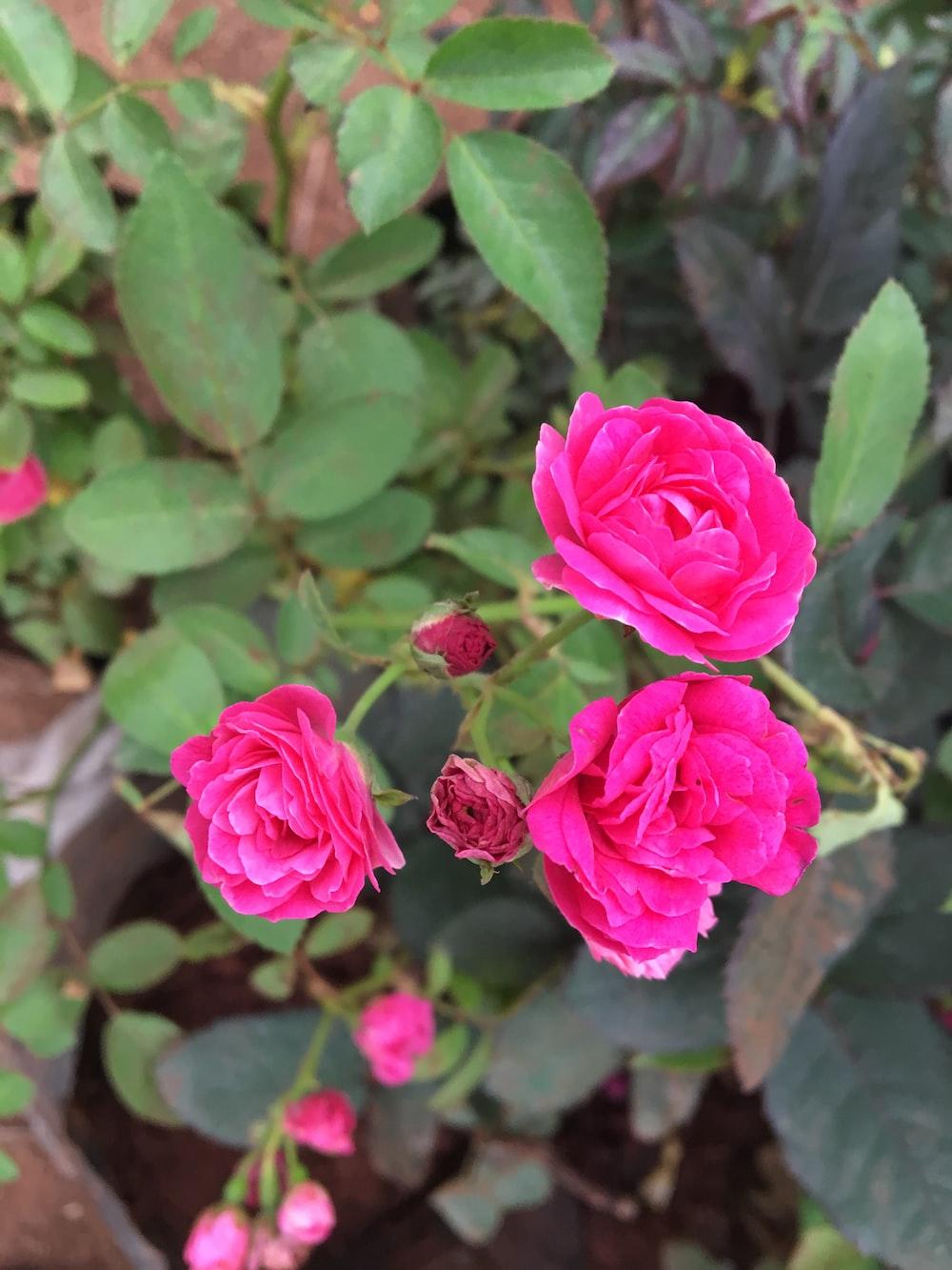 Flowers 9 Best Free Flower Evening Marigold And Hyderabad