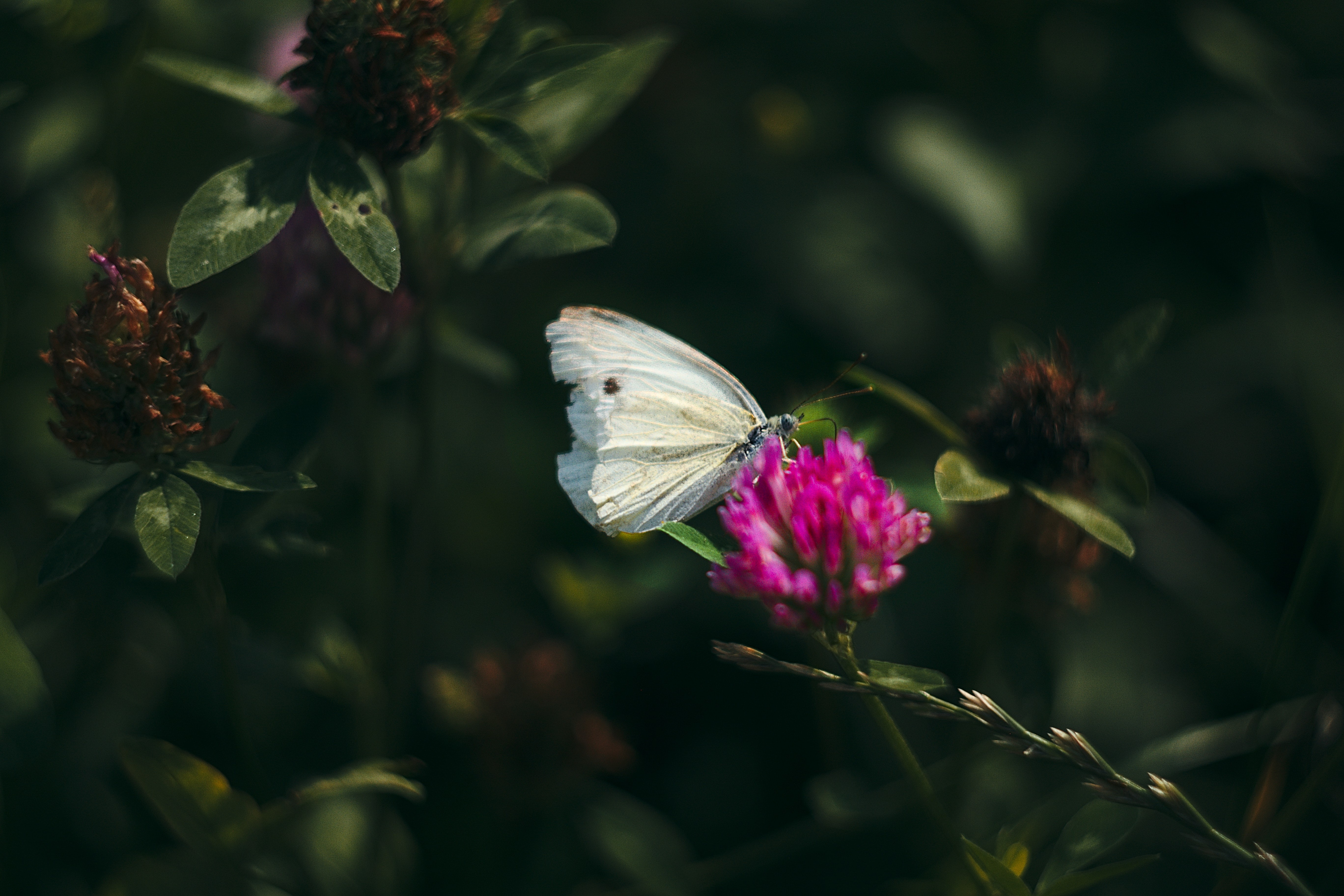 white moth perched on pink flower