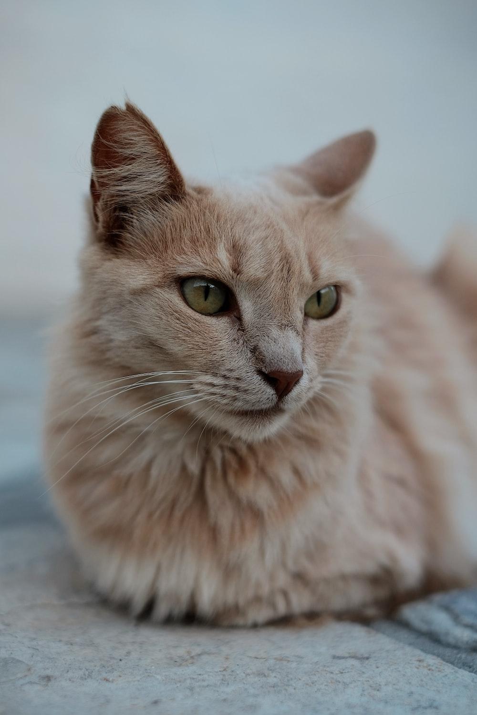 short-coated orange cat on gray surface