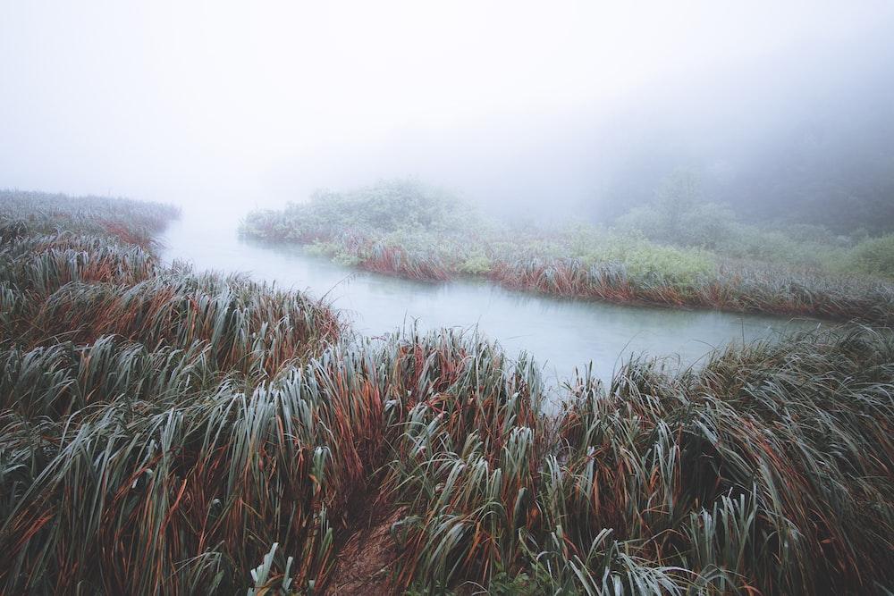 body of water between grass