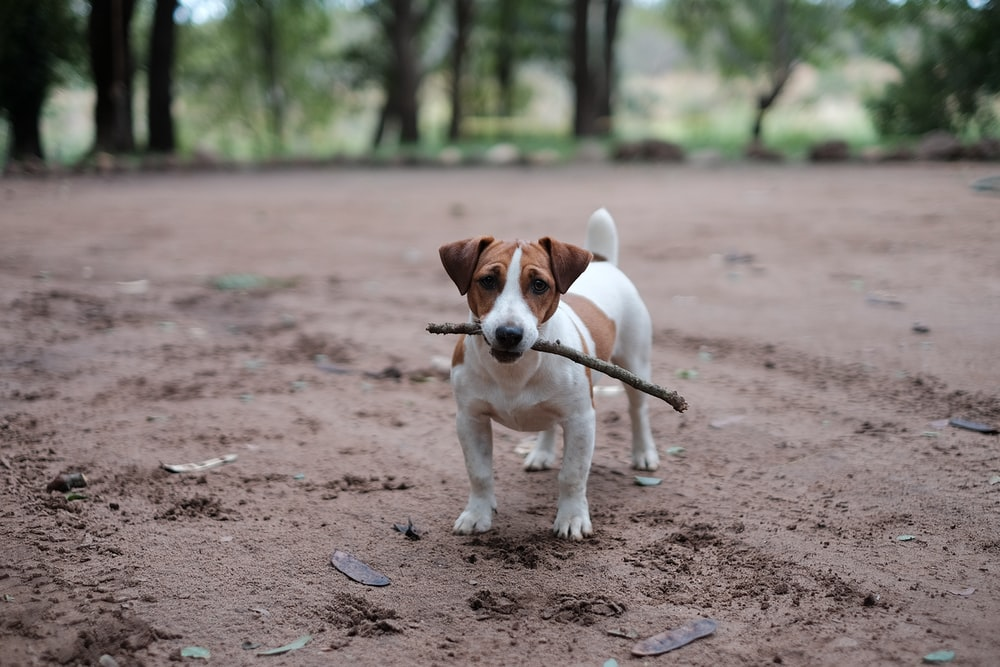 white and brown puppy petching wood