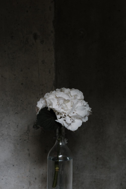 white flowers in clear glass bottle