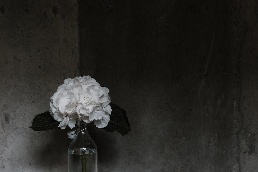 closeup photo of white petaled flower arrangement
