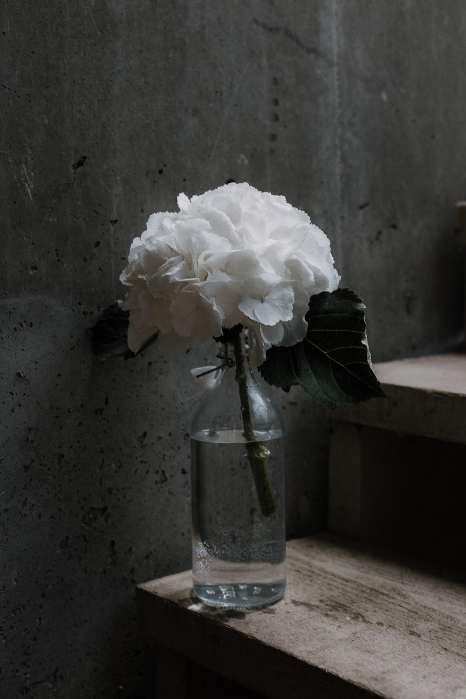white petaled flower on glass jar