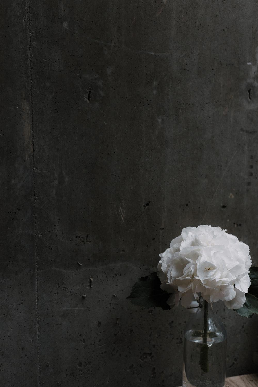 white petaled flowers beside gray wall