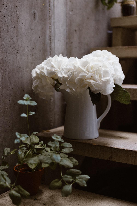 Dark Florals Photo By Annie Spratt Anniespratt On Unsplash