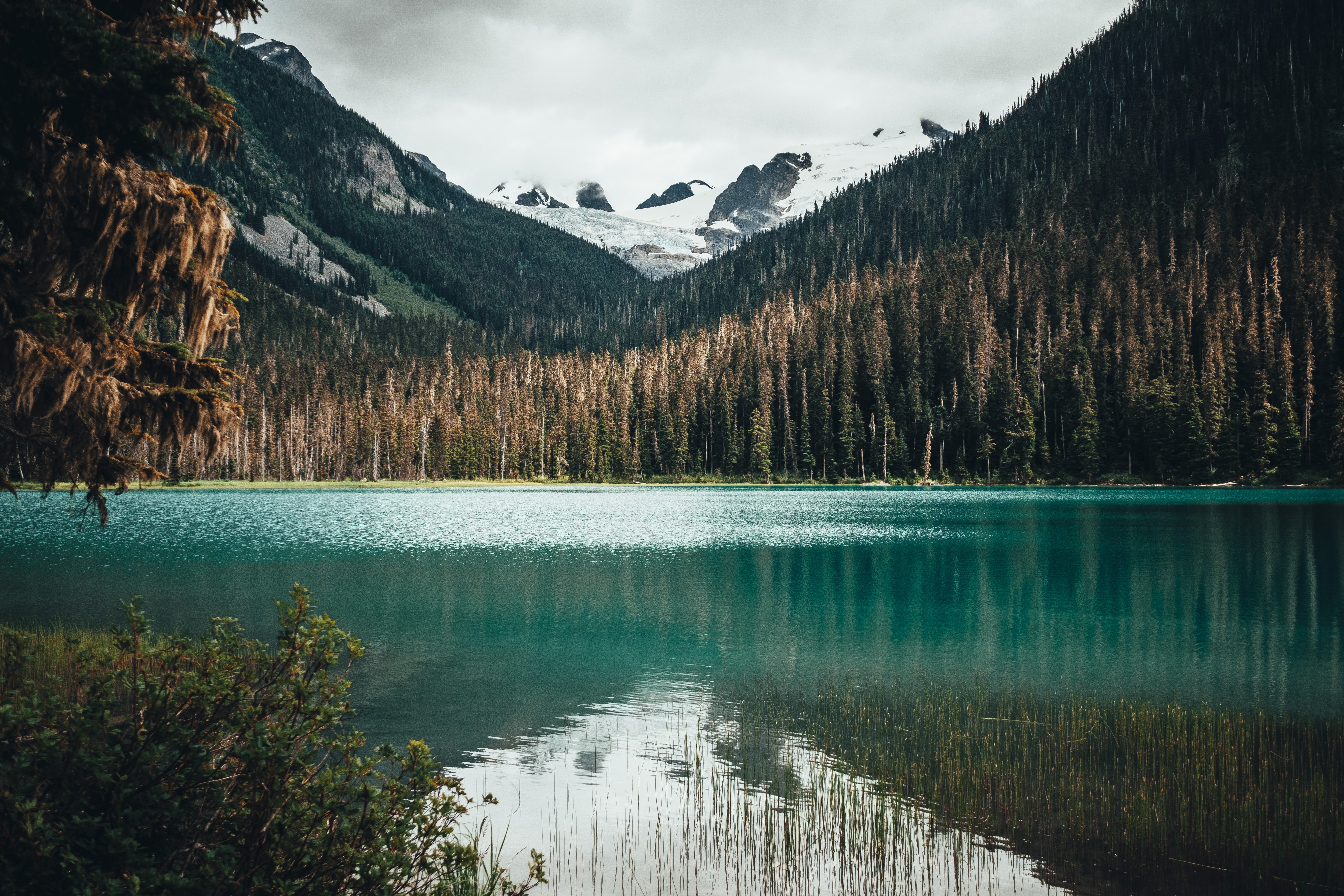 scenery of body of water near a forest