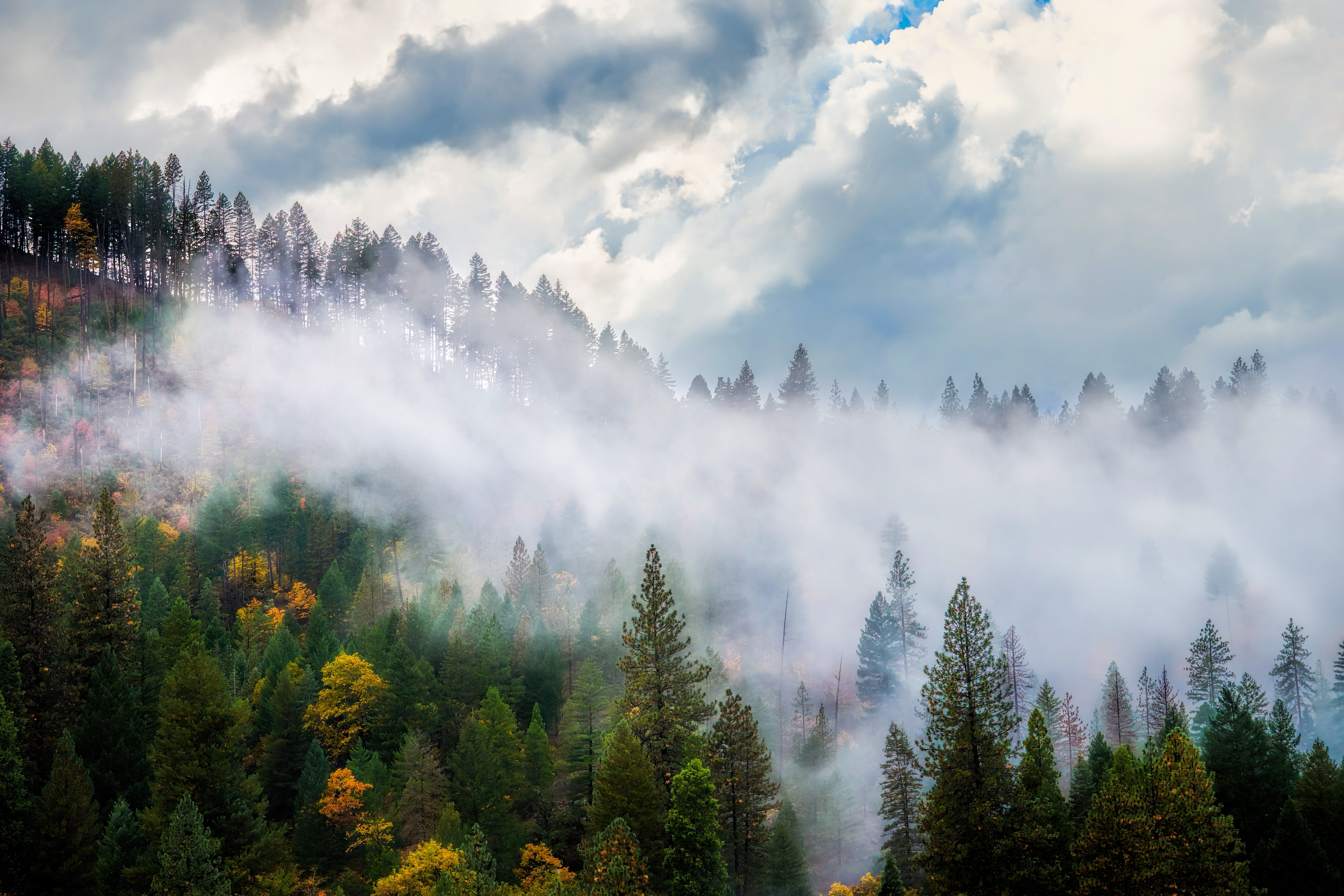 photo of green trees with white fogs during daytime