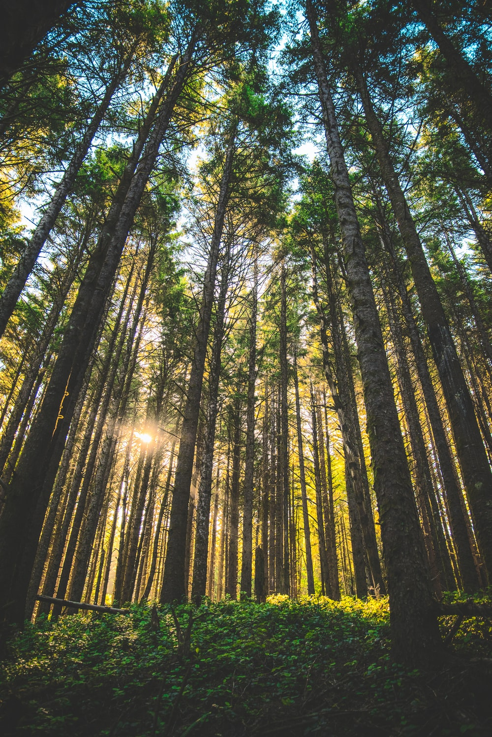 low-angle view photography of trees in forest