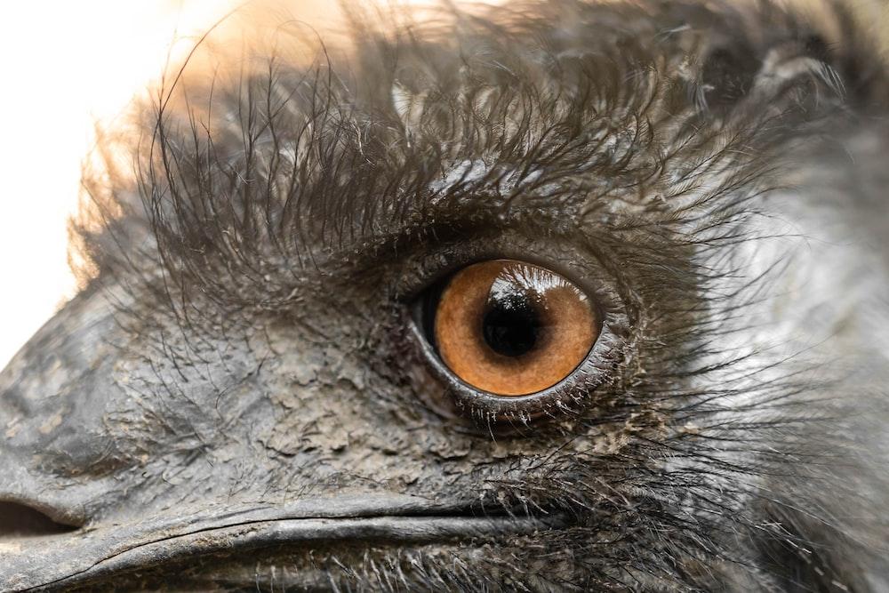 closeup photo of animal eye