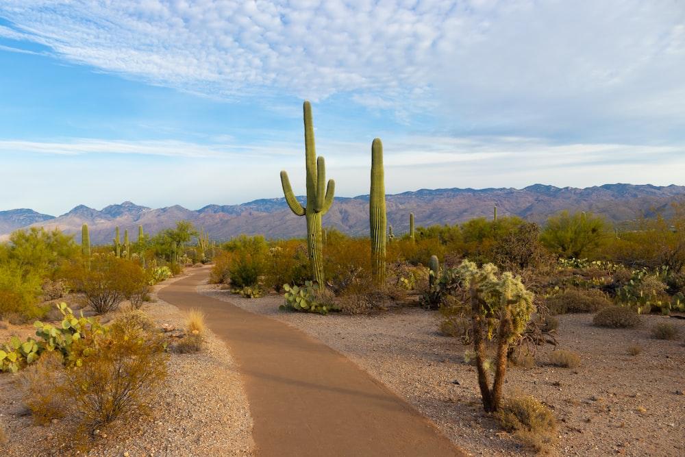green cactus during daytime