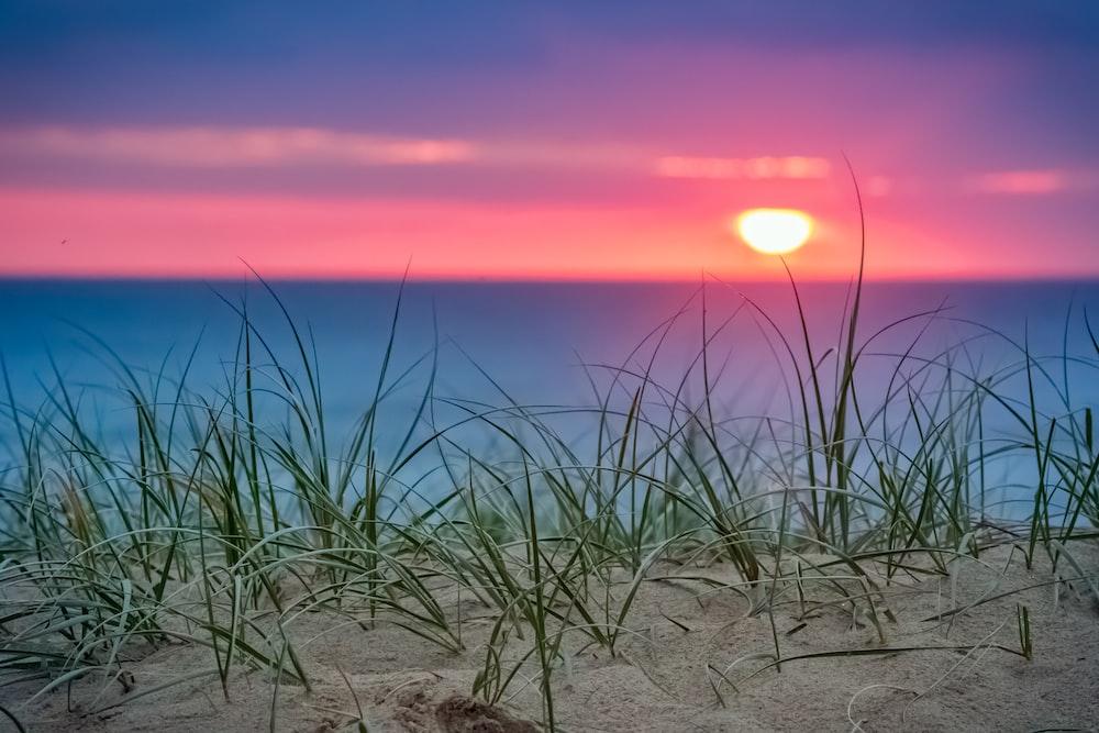 ocean shore during daytime