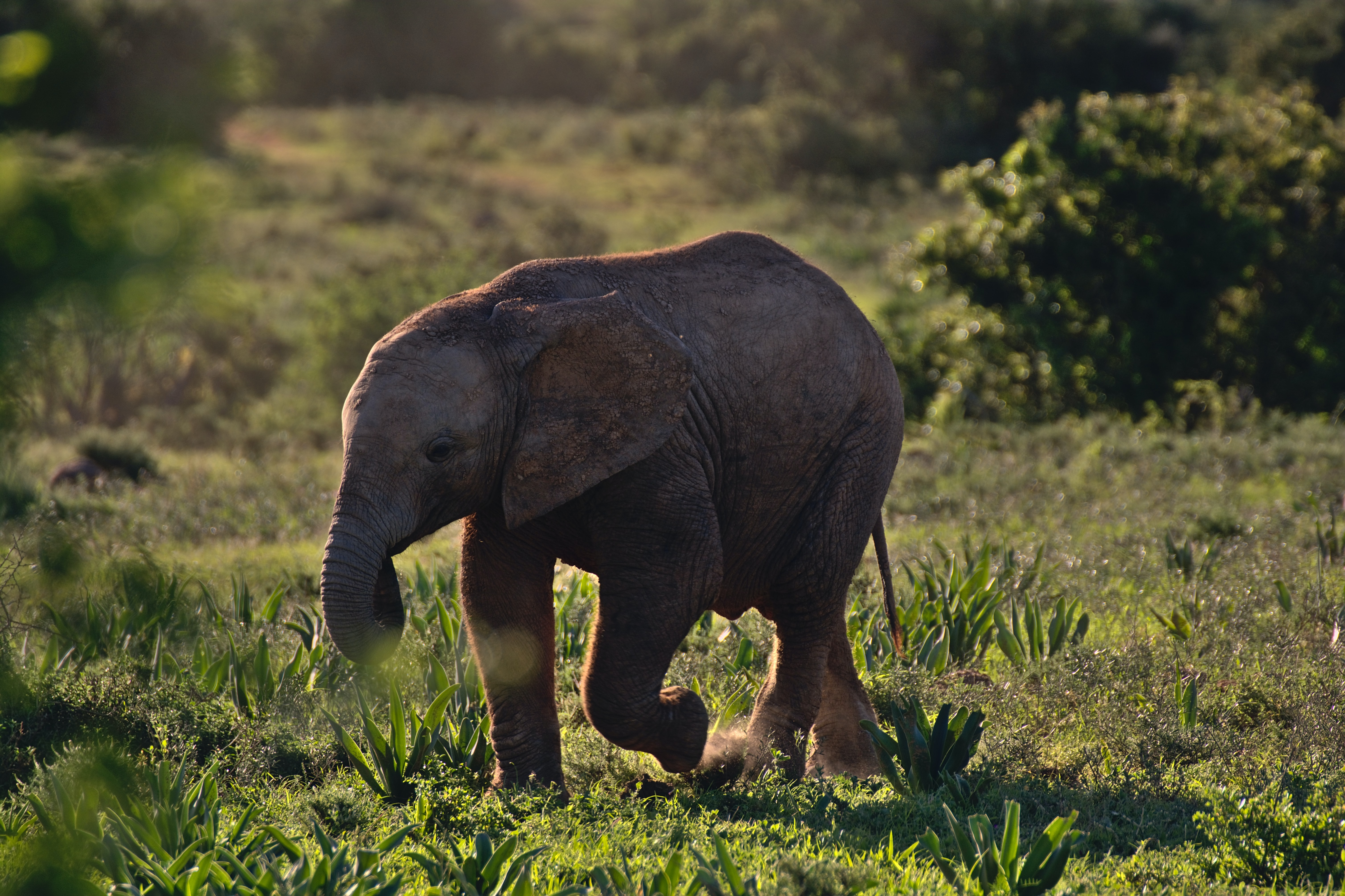 brown baby elephant walking on green grass field during daytime