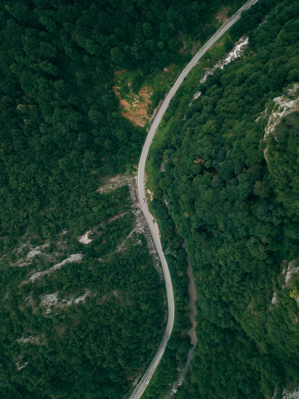 aerial view of road between forest