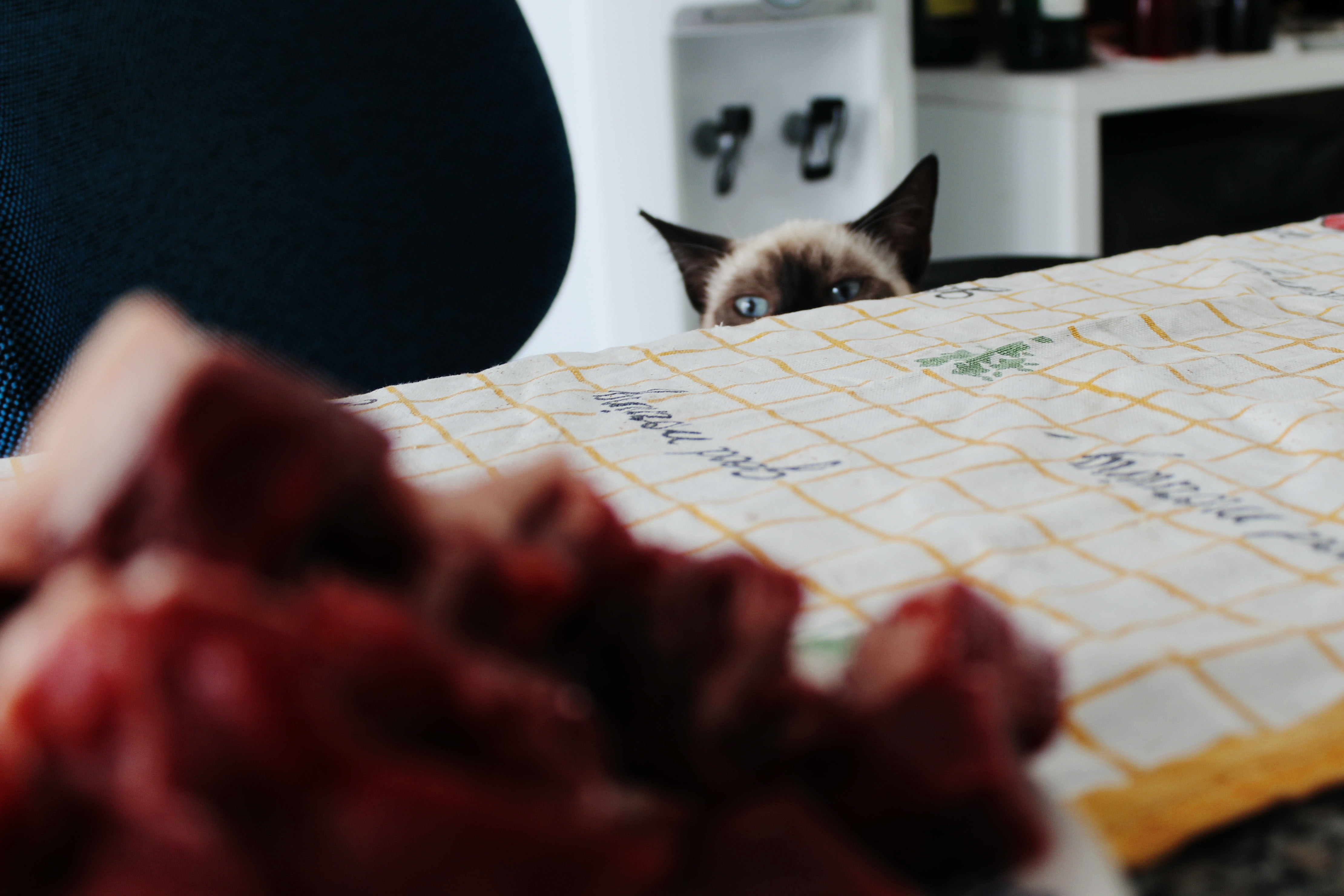 Siamese cat peeping near edge of table