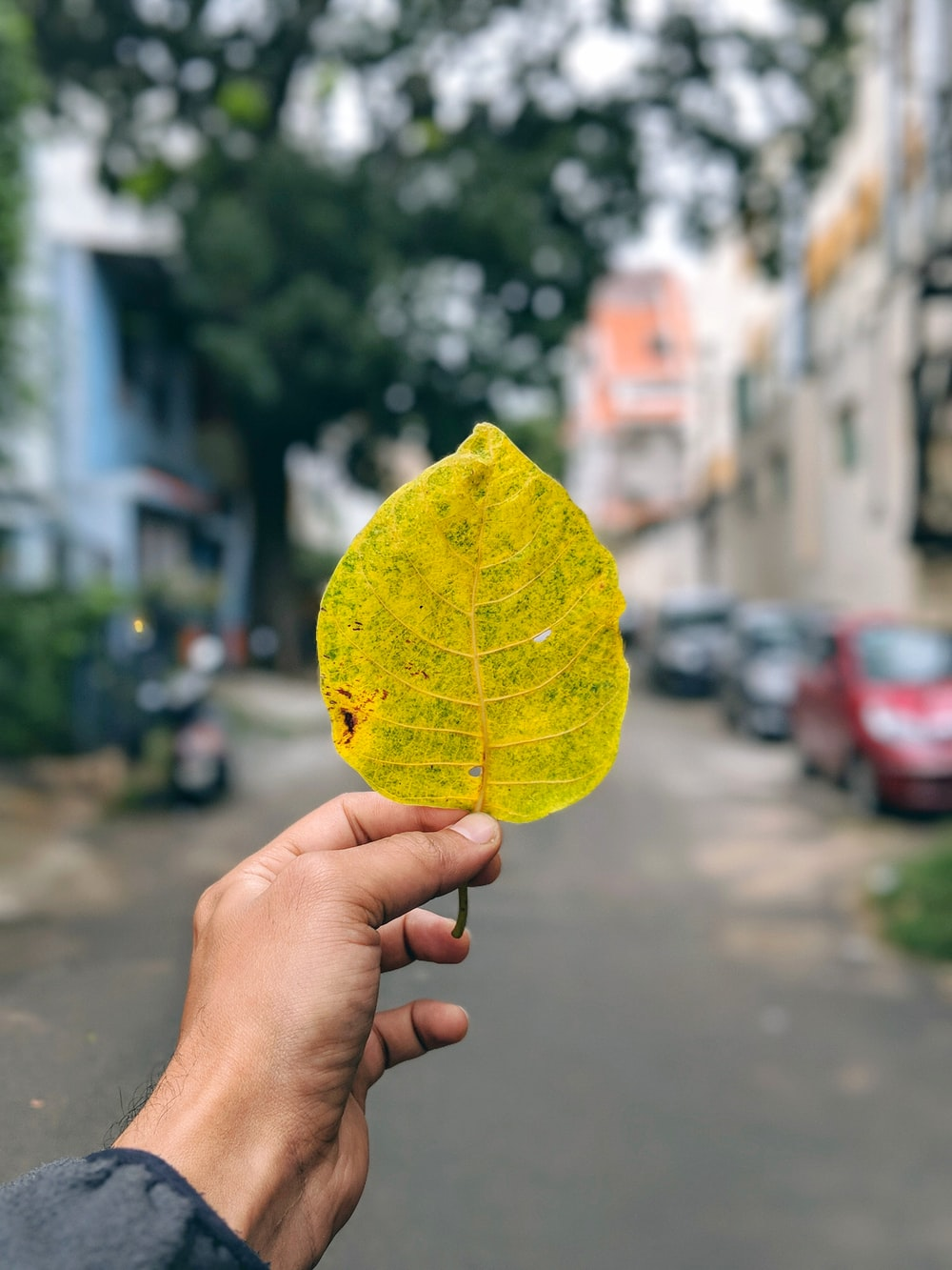 person holding yellow and green leaf