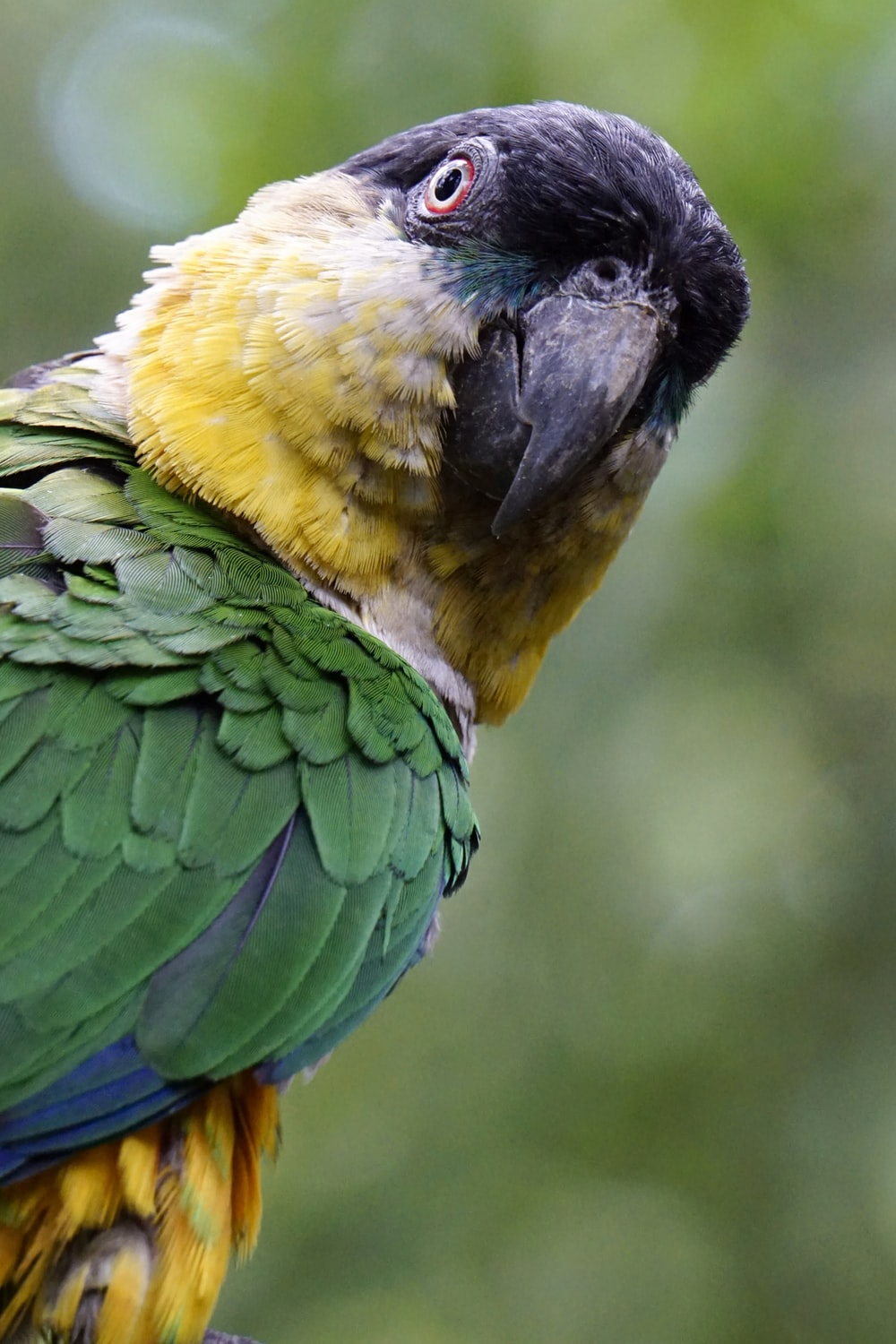 shallow focus photography of parrot