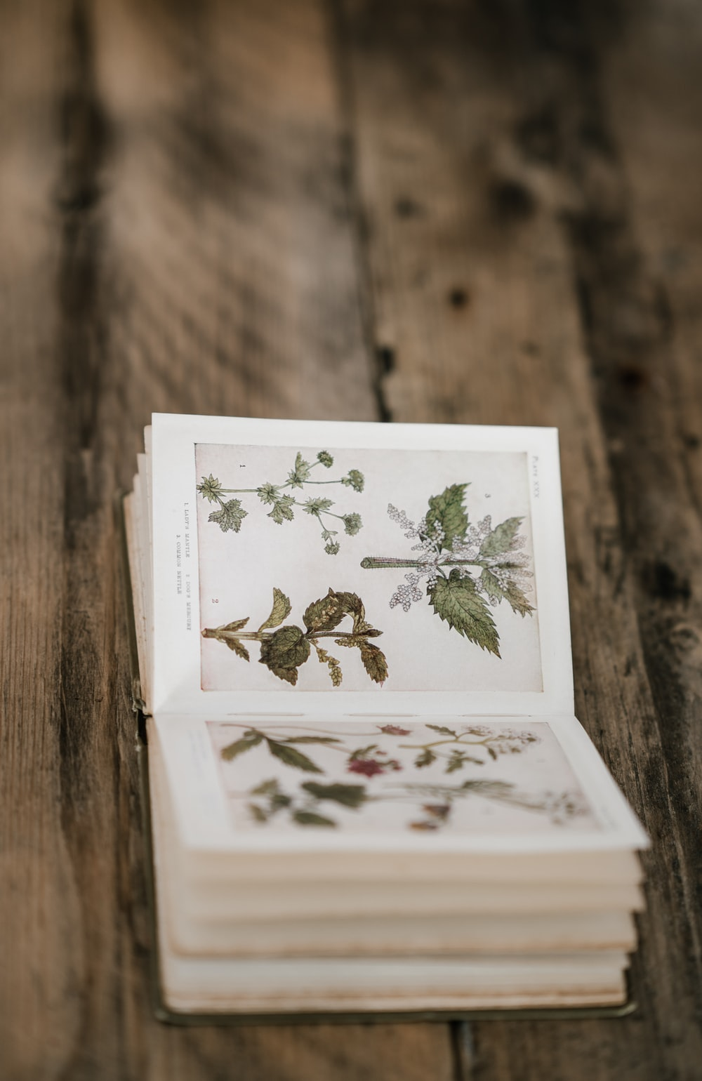 green leafed plant book