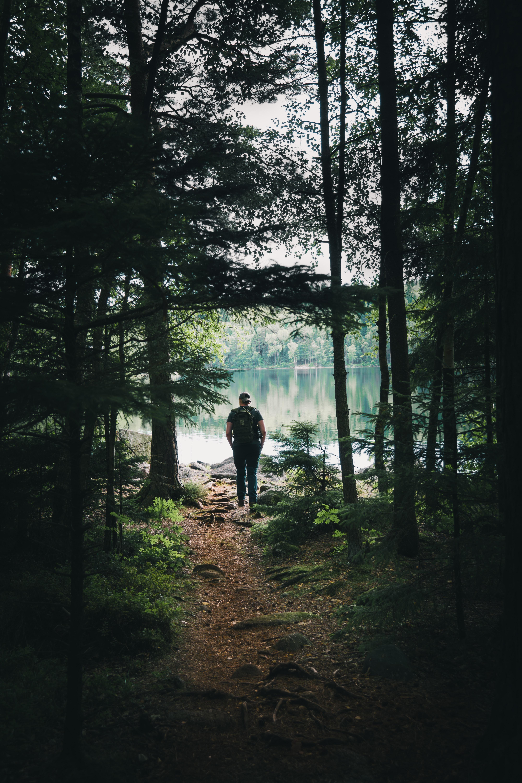 man walking on forest near lake