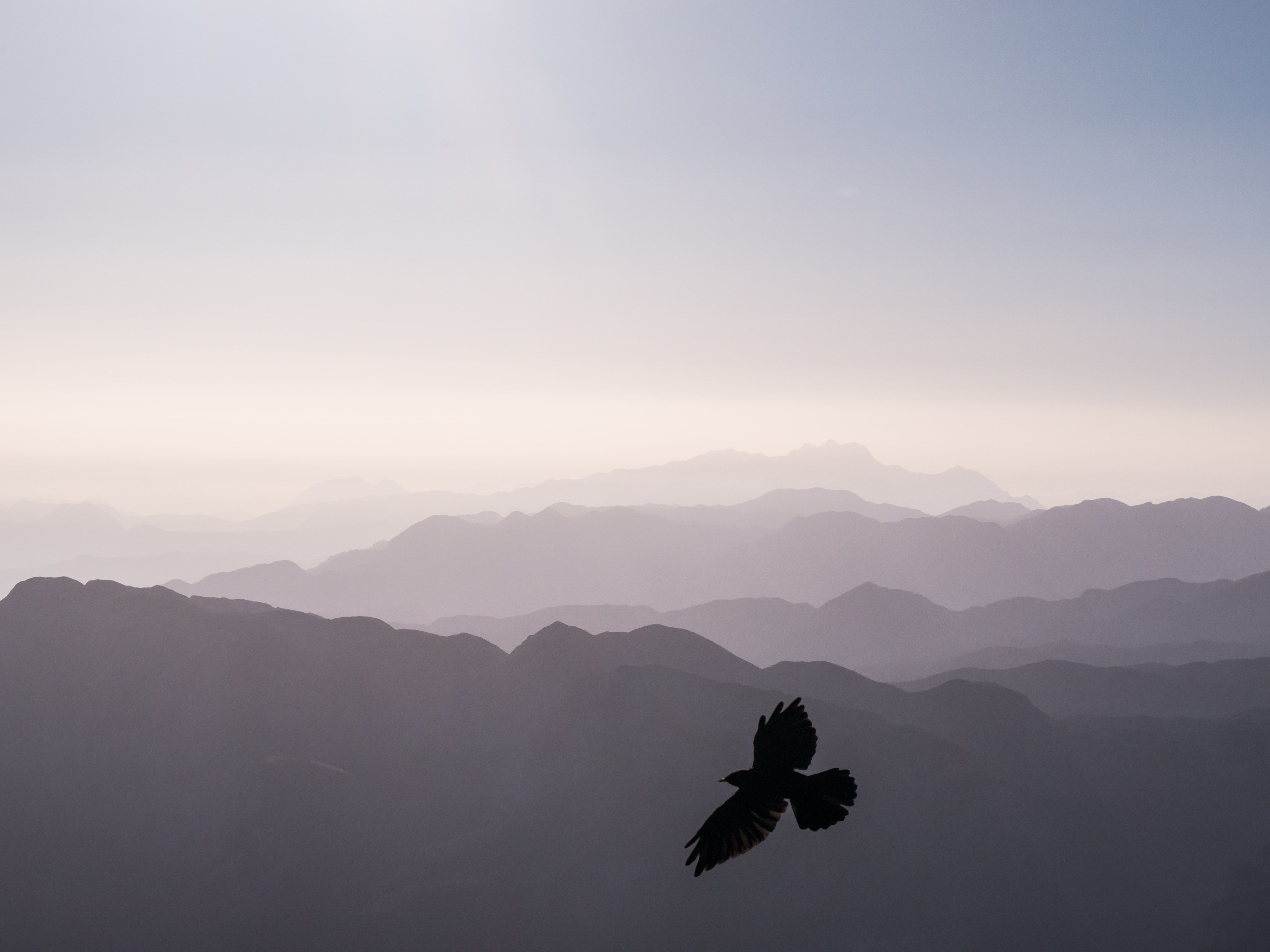 bird flying over mountains