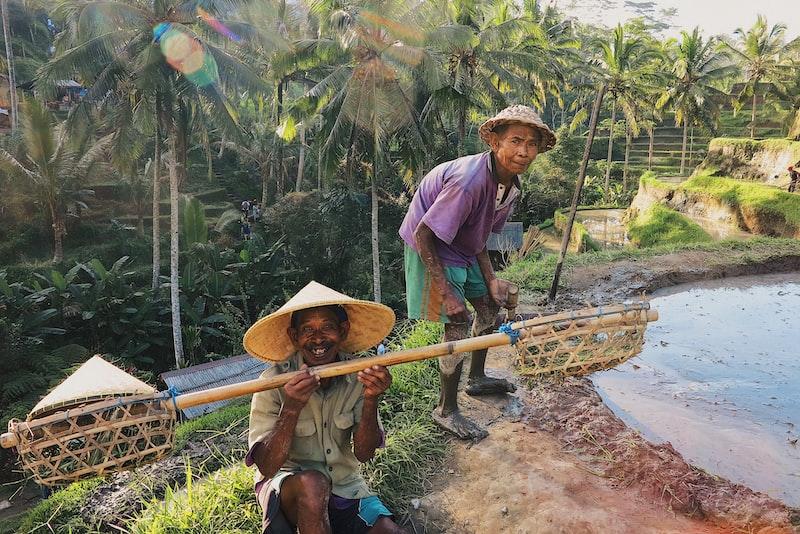men and rice plantation