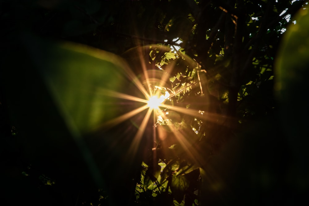 sun rays coming through green leaves