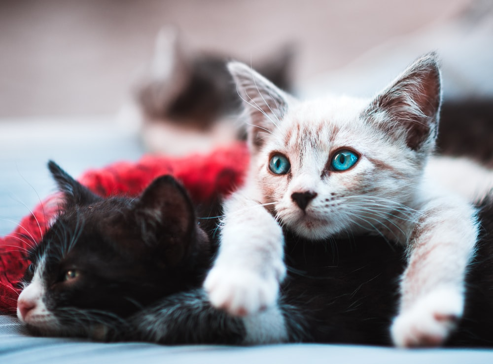 20+ Cat Pictures & Images HD   Download Free Images ...