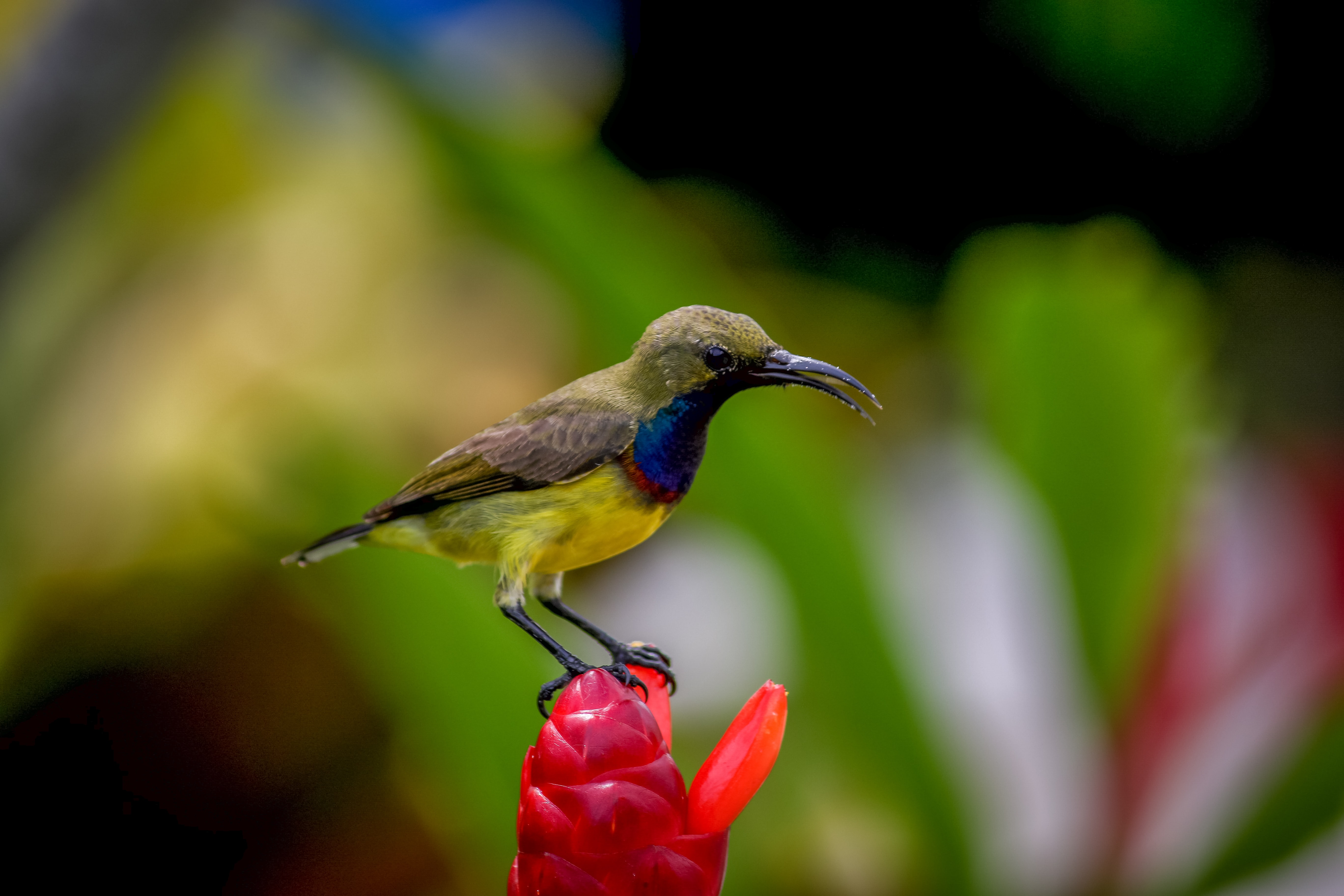 shallow focus photography of bird on red flower