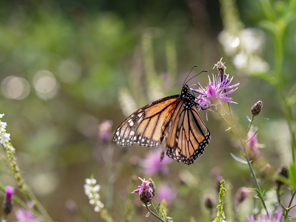 shallow focus photo of brown butterfly