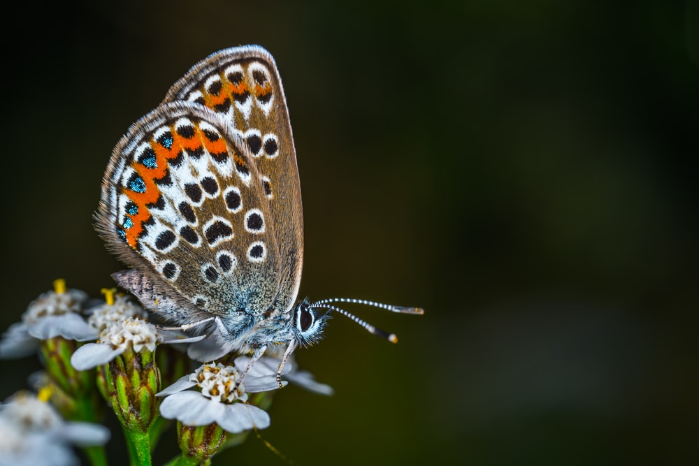 selective focus photography of brown and orange butterfly
