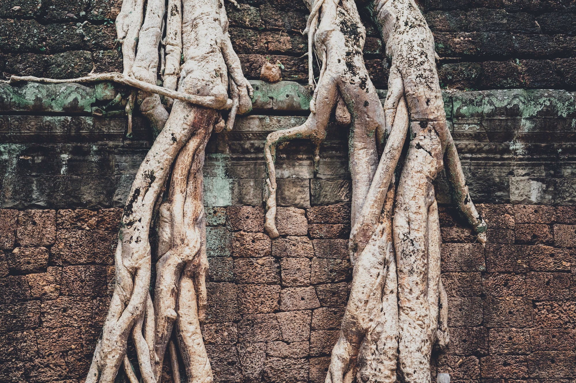 Loved exploring the ancient temple of Angkor Wat in Cambodia and getting a sense of the history that these trees have seen over the years.  The temples were built in 1100, who knows what amazing things have happened within these walls?