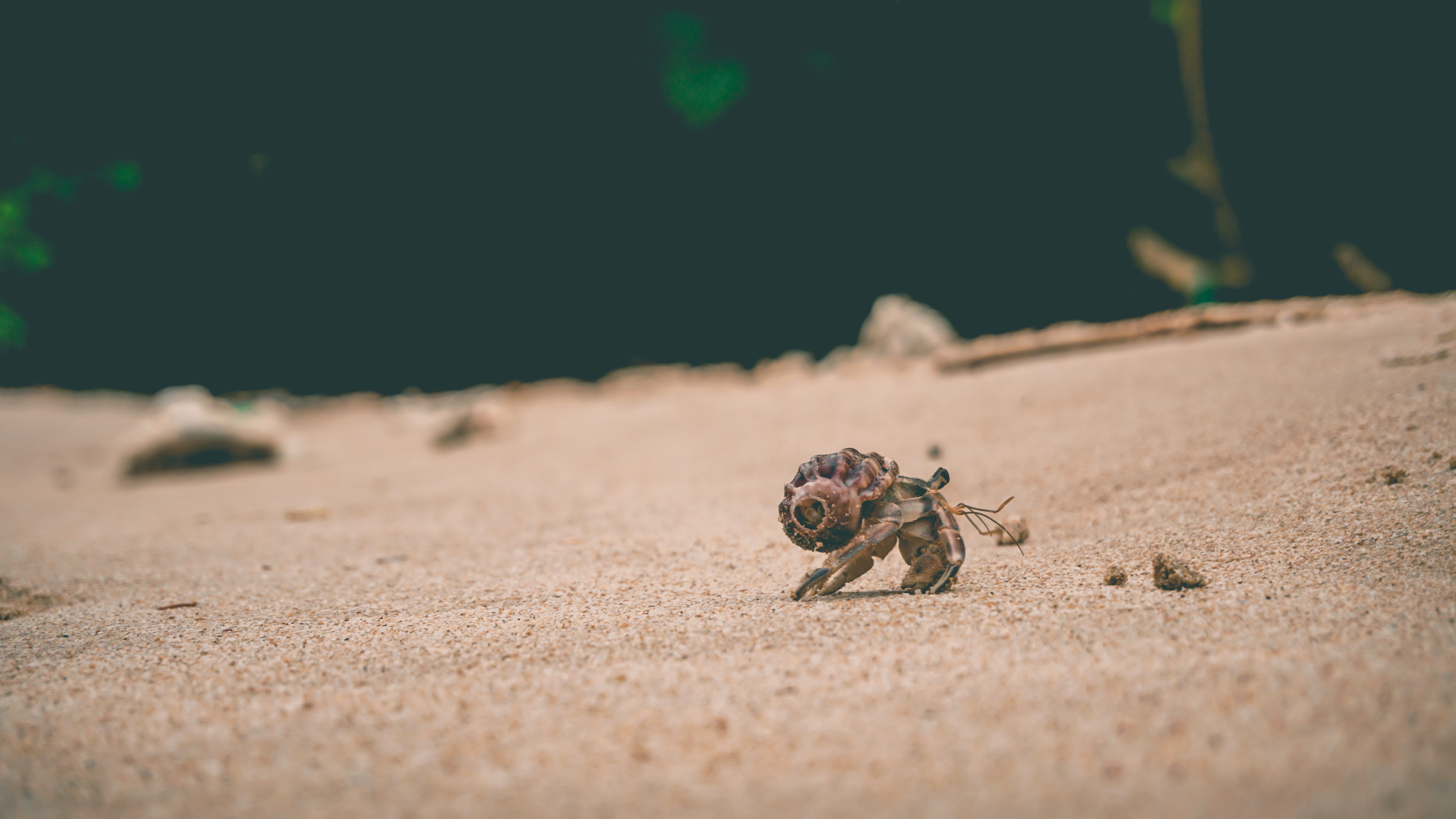 brown hermit crab on sand