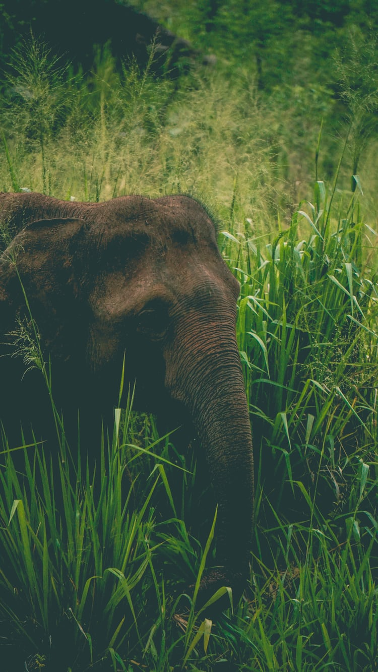 Elephant Standing On Green Grass Field Photo Free Grass